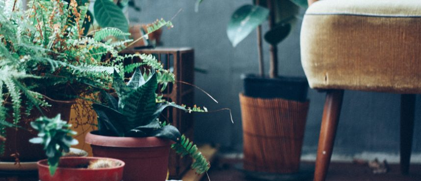 Top 8 Indoor Plants